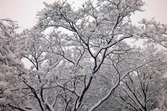 snow day, 2013.