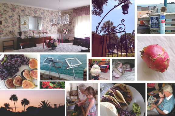 field notes: florida 2014.