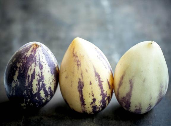 pepino melon, by Jennifer Silverberg | http://www.jennifersilverberg.com